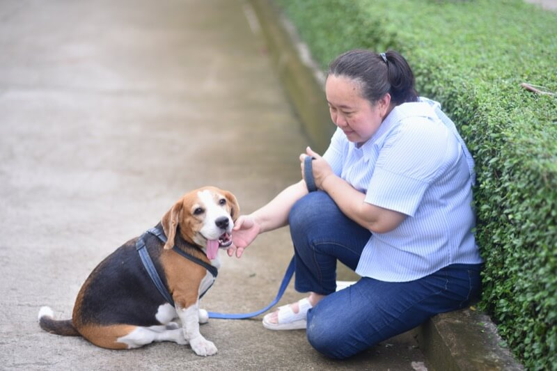 Asian senior woman playing with her beagle dog